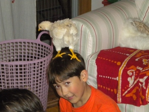 Boy with a chicken on his head.